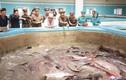 Hình ảnh trang trại cá trê khiến ông Kim Jong Un thích thú