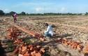 Bà Rịa - Vũng Tàu: Khổ vì mua đất nền của Công ty Ô Cấp