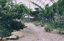Giới trẻ Sài thành đua nhau check-in tại vườn xương rồng