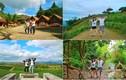 Cặp đôi Hàn Quốc nổi tiếng với kiểu chụp ảnh một tư thế
