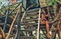 Hứng thú với homestay trên cây ở ngoại thành Hà Nội