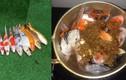 Chàng trai Đà Nẵng gây sốc khi dùng cá Koi nấu ăn
