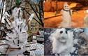 """Người tuyết xấu """"thảm họa"""" làm giảm không khí đón năm mới"""