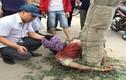 Hy hữu: Tự tử bất thành, nam thanh niên bị dân trói vào gốc cây