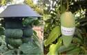 1001 cách chống trộm trái cây khiến dân mạng cười lăn lóc