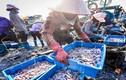 Muôn màu bức tranh chợ cá Bến Do sáng sớm ở Quảng Ninh
