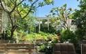 Vườn rau sạch 200m2 sum suê cây trái của nữ giám đốc Sài Gòn