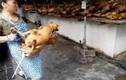 Lễ hội thịt chó vẫn diễn ra ở Trung Quốc bất chấp chỉ trích