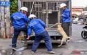 Người Sài Gòn vội vàng ôm thú cưng bỏ chạy khi thấy đội bắt chó xuất hiện