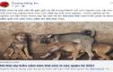 Dân mạng nói gì về đề xuất cấm ăn thịt chó mới được đăng tải?