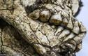 Phát hiện bộ xương 6.000 năm tuổi còn nguyên vẹn dưới công trường