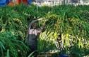 Vườn lan siêu hiếm ở Lào Cai, mỗi năm chỉ thu 1 lần 20 tỷ đồng