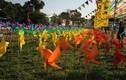 """Phát mê với """"cánh đồng chong chóng"""" sắc màu tại Hoàng thành Thăng Long"""
