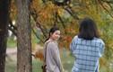 Chùm ảnh: Mãn nhãn ngắm Hà Nội đẹp chẳng kém Hàn Quốc mùa thay lá