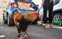 Tiếng gáy của một con gà làm nước Pháp chia rẽ dữ dội