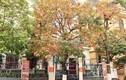 Hà Nội đẹp như châu Âu mùa cây thay lá