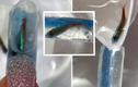 """Biến móng tay thành """"bể thủy sinh"""", tiệm nail khiến netizen bức xúc"""