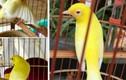 """Video: """"Lóa mắt"""" trước bộ sưu tập chim màu khủng 10 tỷ ở Việt Nam"""
