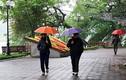 Dự báo thời tiết 14/11: Cả nước có mưa