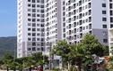 Bán căn hộ chưa đủ điều kiện, doanh nghiệp ở Đà Nẵng đối mặt điều này