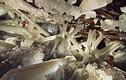 Thám hiểm hang động pha lê lớn nhất thế giới