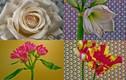 Video quá trình nở của 21 loài hoa hút người xem