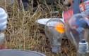 Điều gì xảy ra khi bóng đèn tương tác lò vi sóng?