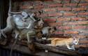 Ảnh động vật: Đàn khỉ đuổi bắt mèo trong tòa nhà hoang