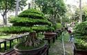 Ảnh: Kỳ hoa dị thảo đổ về hội hoa xuân lớn nhất Sài Gòn