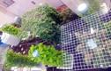 Kinh ngạc vườn rau trong nhà khủng nhất Sài Gòn: 1m² thu 40kg rau