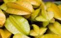 Sốc: Khế ngọt Việt Nam 50.000 đồng/quả, củ đậu đắt 10 lần