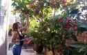 Biệt thự 4 mùa rợp sắc hoa của ca sỹ Hồ Lệ Thu