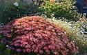 Lạc vào vườn hoa 700m2 của mẹ Việt ở Australia