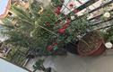 Vườn hồng hơn 70 gốc đẹp như tranh vẽ ở Bắc Giang