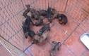 Những trang trại chó hốt bạc tại Việt Nam