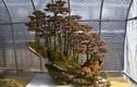 Mê mẩn loạt tuyệt tác rừng bonsai siêu đẹp