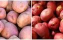 """Chi tiết cách phân biệt khoai tây Trung Quốc """"đội lốt"""" Đà Lạt"""