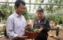 """""""Ngả mũ"""" thú chơi lan rừng có một không hai của đại gia Việt"""