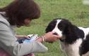 Video: Chú chó biết phát hiện bệnh ung thư, cứu sống chủ nhân một cách thần kỳ