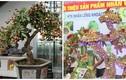 Thích thú ngắm nhìn những chậu bonsai nhãn đẹp hút mắt
