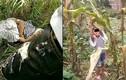 Thi thể không toàn vẹn của bé gái 8 tuổi được phát hiện trong rừng tre