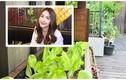 Ngắm vườn rau xanh mướt trong biệt thự triệu đô của Tăng Thanh Hà