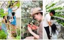 Những vườn rau xanh mướt trong nhà sao Việt ở Sài Gòn