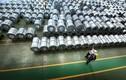 Vì sao Tôn Hoa Sen có doanh thu kỷ lục nhưng lợi nhuận chạm đáy?