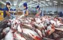 Nghịch lý tiêu chuẩn hải sản vào siêu thị Việt khó hơn xuất châu Âu?