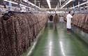 Ảnh độc bên trong nhà máy sản xuất lớn nhất của Zara