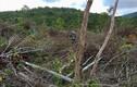 Điều tra vụ án phá rừng 30 nghìn m2 ở Gia Lai