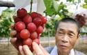 10 loại trái cây đắt nhất thế giới, 1 quả chuối có giá hơn 200 triệu đồng