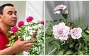 3 vườn hồng đẹp mê mẩn trong nhà sao Việt