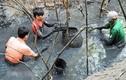 Lặn bùn bắt cá đồng mùa nước cạn thu tiền triệu mỗi ngày